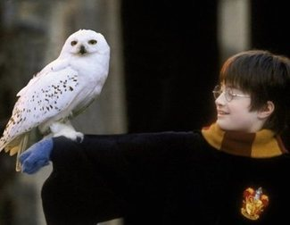 'Harry Potter' Fans Resurrect their Favourite Characters