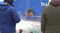 A dog is forced and put at risk while shooting 'A Dog's Purpose'