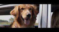 'A Dog's Purpose' english trailer